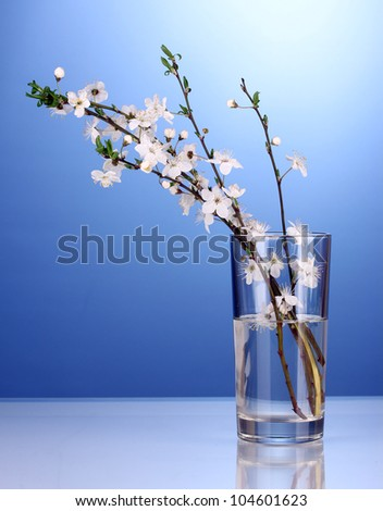 beautiful cherry blossom in vase on blue background - stock photo