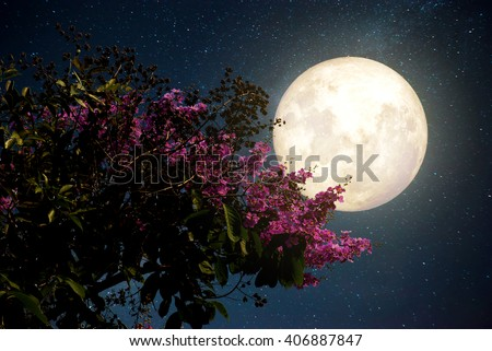 Beautiful cherry blossom (sakura flowers) with Milky Way star in night skies; full moon - Retro style artwork with vintage color tone(Elements of this moon image furnished by NASA) - stock photo