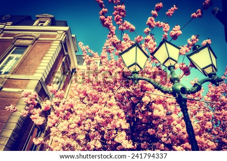 Beautiful cherry tree blossom on blue sky background - stock photo