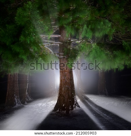 Beautiful christmas forest. - stock photo
