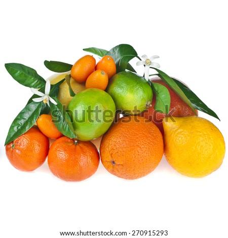 Beautiful citrus fruits of  lemon, orange, grapefruit , lime,  kumquat, isolated on white background - stock photo