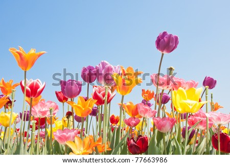Beautiful colored flowers with copyspace for text - stock photo