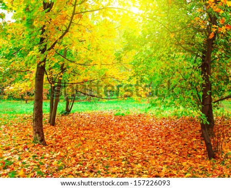 Beautiful colorful autumn picturesque park in sunny day with country rural road scenic. Fresh diminishing deciduous forest grove at dawn. Perspective vanishing alley. Foggy weather in late September. - stock photo