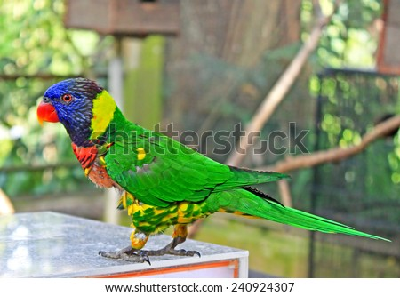 Beautiful colorful blue headed parrot - stock photo
