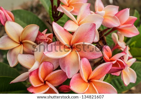 Beautiful colorful flower in the garden - stock photo