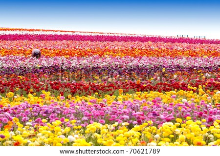 Beautiful colorful flowers in the field - stock photo