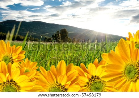 Beautiful colorful flowers on landscape background - stock photo