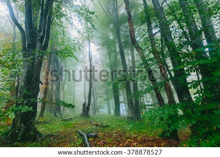 Beautiful colorful foggy forest scene in the Croatian Plitvice National Park  - stock photo