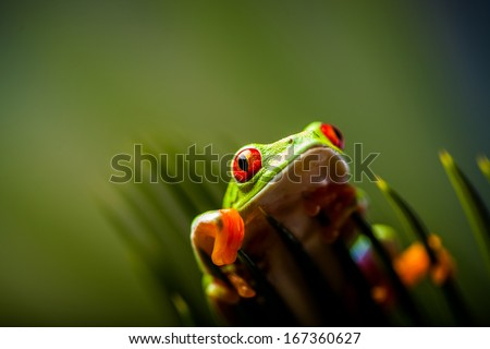 Beautiful colorful frog in the jungle - stock photo