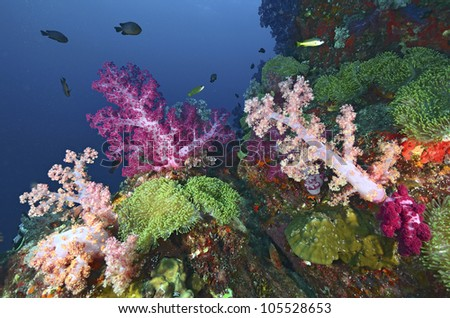 Beautiful colorful soft coral with diver, Similan, Thailand. - stock photo
