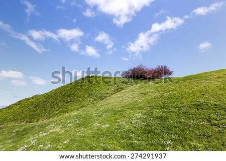 Beautiful contrast landscape green grass blue sky - stock photo