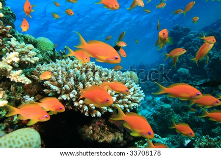 Beautiful Coral Reef and Colorful Fish - stock photo