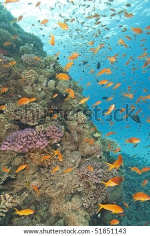 Beautiful coral reef with fish life and blue water background - stock photo