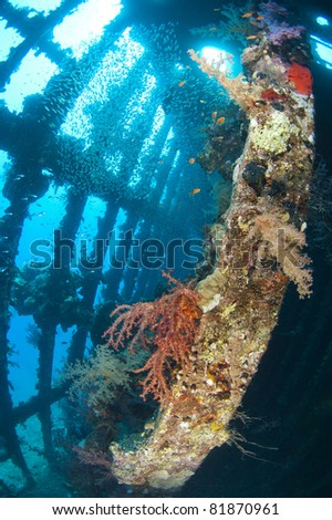 Beautiful coral scene in the sun with glassfish inside a large underwater shipwreck - stock photo