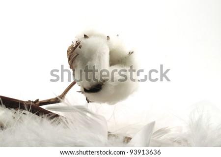 beautiful cotton background - stock photo