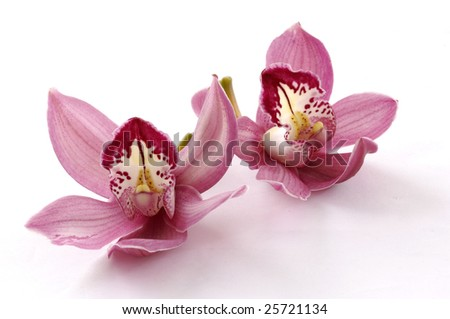 Beautiful couple pink orchid blossoms isolated on a white - stock photo