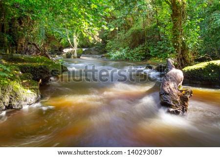 Beautiful creek of Clare Glens, Co. Limerick, Ireland - stock photo