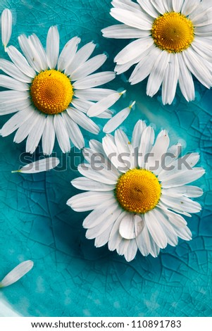 Beautiful daisies floating in bright turquoise water - stock photo