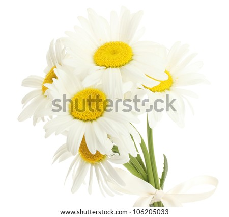 beautiful daisies flowers isolated on white - stock photo