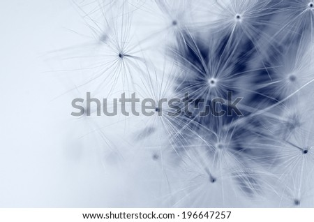 Beautiful dandelion with great colors - stock photo