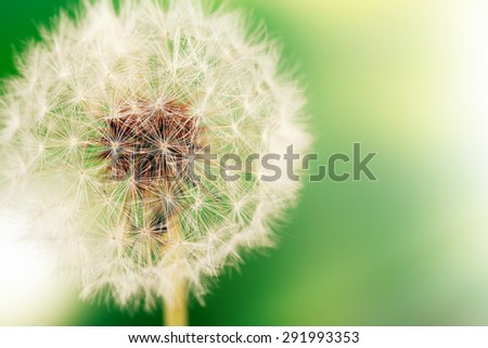 Beautiful dandelion with seeds, close-up - stock photo