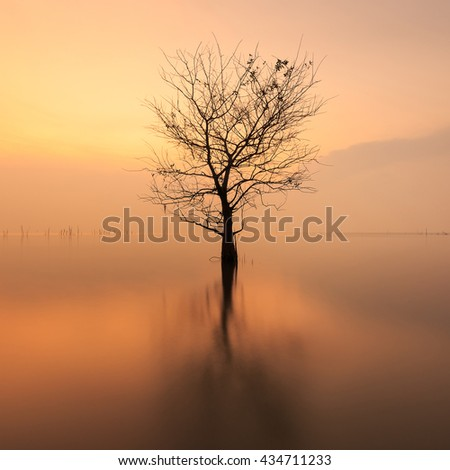 beautiful dead tree in lake,Thailand - stock photo