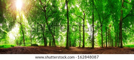 Beautiful 360 degree panorama in the forest in spring in the Netherlands - stock photo