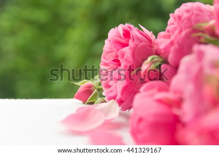 Beautiful, delicate, pink roses and rose petals on a green background, a beautiful background for cards, place for text - stock photo