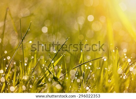 Beautiful dew grass with drops in the morning light - stock photo