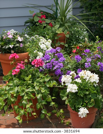 beautiful display of potted flowers and plants - stock photo