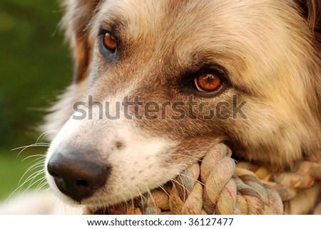 beautiful dog - stock photo