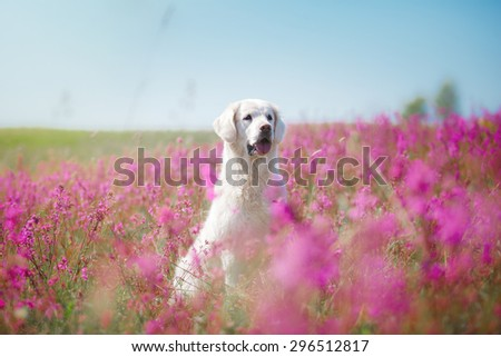 beautiful dog in flowers field, on the nature of motion - stock photo