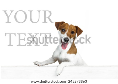 Beautiful dog looks out from behind gray a banner  white background. Empty space for your text  - stock photo