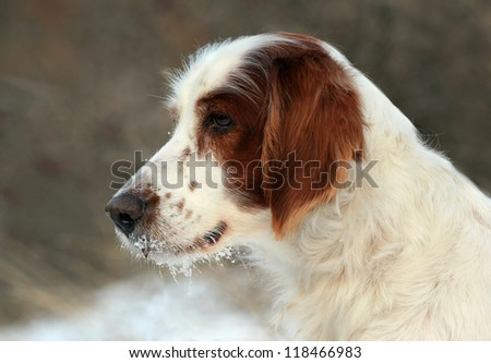 Beautiful dog portrait - stock photo