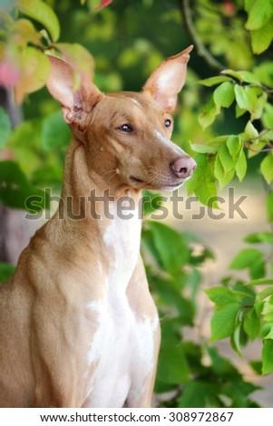 Beautiful dog portrait among leaves - stock photo
