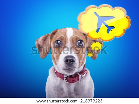 Beautiful dog with a blue background. Funny animals. Icon plane phone number - stock photo
