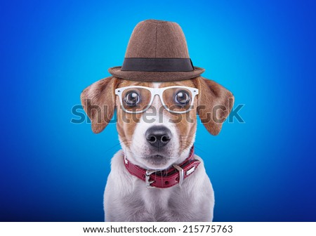 Beautiful dog with glasses and a hat on a blue background. Funny animals. Hipster dog - stock photo