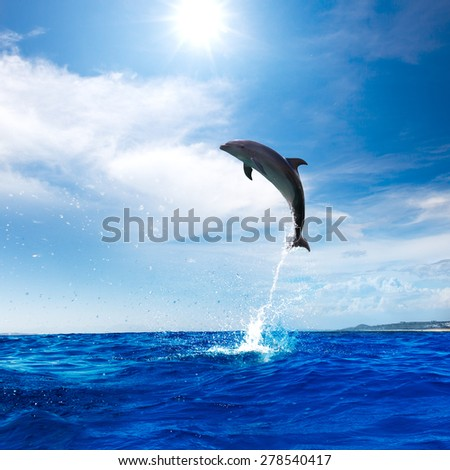 Beautiful dolphin leaping from Blue Ocean - stock photo