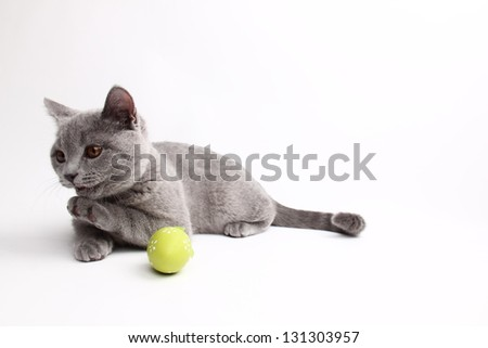 Beautiful domestic gray or blue British short hair cat/Funny young kitten playing with colored Easter eggs - stock photo