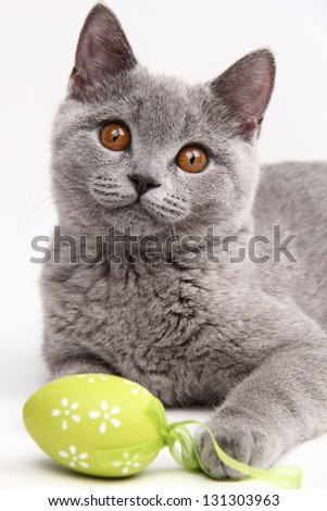 Beautiful domestic gray or blue British short hair cat with yellow eyes/Cat playing with colored Easter eggs - stock photo