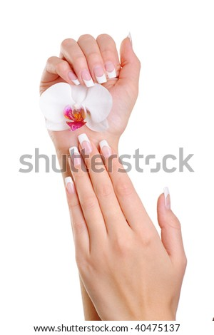 Beautiful elegant woman hand with french manicure hold the white flower - stock photo