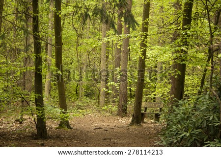 Beautiful English woodland scene with light coming though the trees. - stock photo