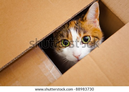 beautiful European cat in a delivery box - stock photo