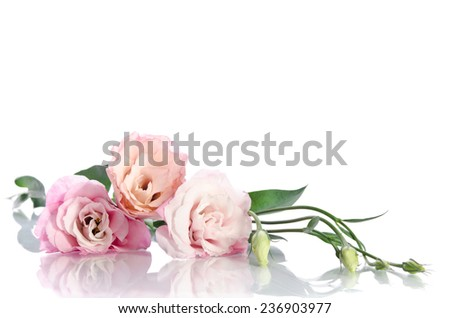 beautiful eustoma flowers with leafs and buds on white background - stock photo