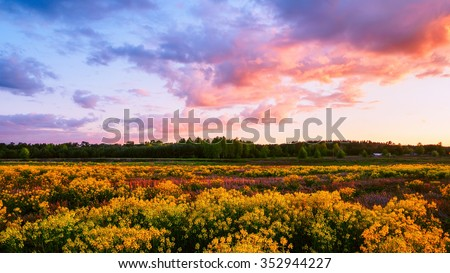 Beautiful evening cloudy sky above the field covered with yellow flowers in spring - stock photo