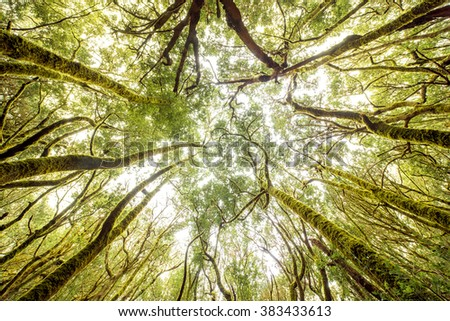 Beautiful evergreen forest in Garajonay national park on La Gomera island. Wide angle view with copy space - stock photo