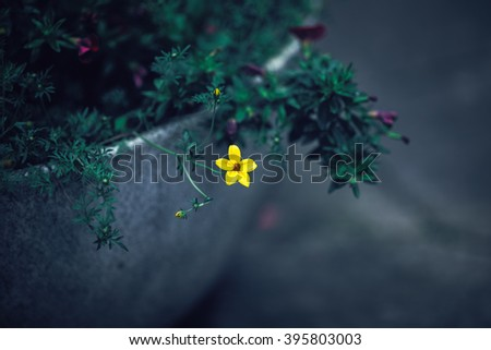 Beautiful fairy dreamy magic yellow flowers with dark green leaves in flowerbed, toned with instagram filters in retro vintage style effect, soft selective focus, blurry background, copyspace for text - stock photo
