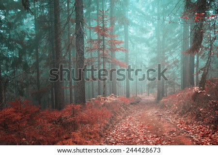 Beautiful fairytale with mystical orange red forest path. Color filter effect used. - stock photo