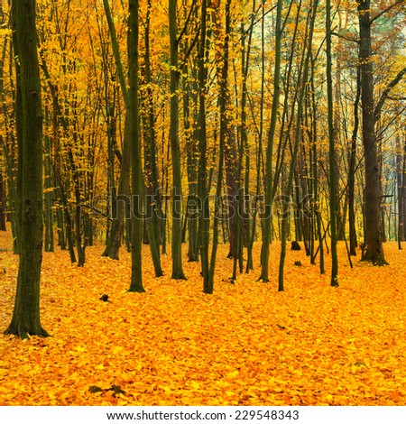 Beautiful fallen park in the forest with yellow and red trees - stock photo
