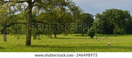 Beautiful Farmland Landscape in Summer - stock photo
